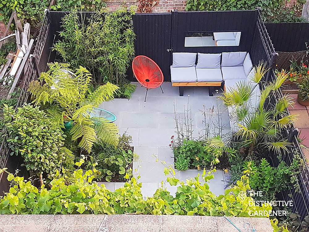Montague Road garden from above