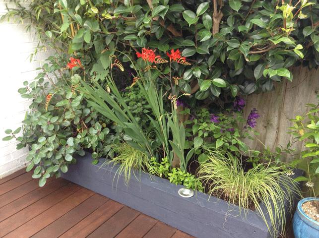 The Distinctive Gardener | raised bed planting