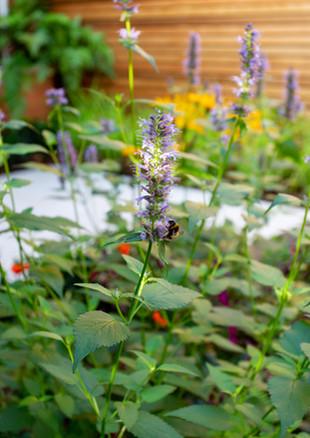 city-garden-acton-lane-bee-on-flowerj