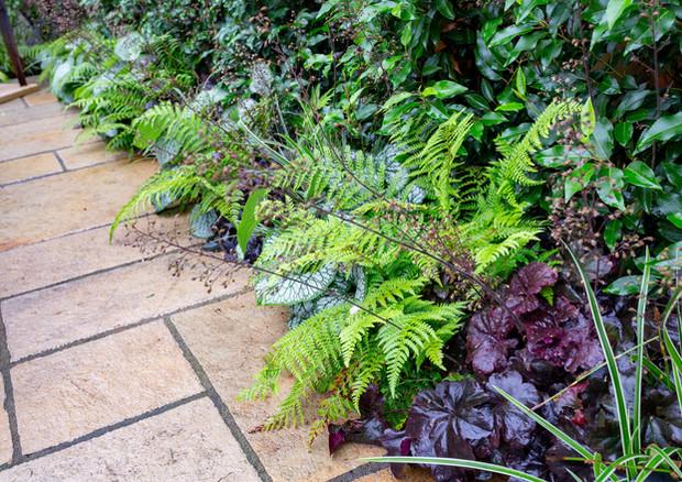 family-garden-hedge-planting-jpg