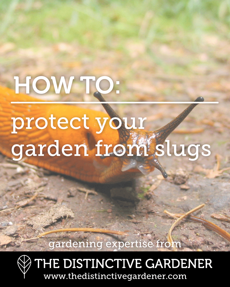 The Distinctive Gardener - protect your garden from slugs