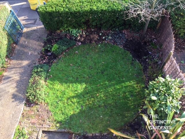 The garden from above before