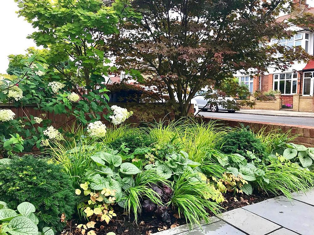 Border planting front garden