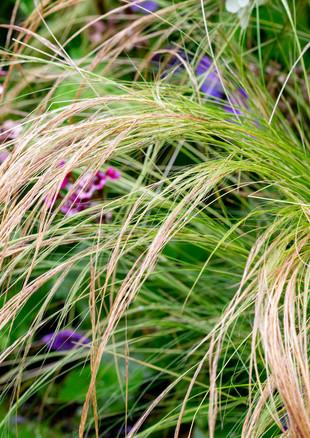 family-garden-grassesjpg