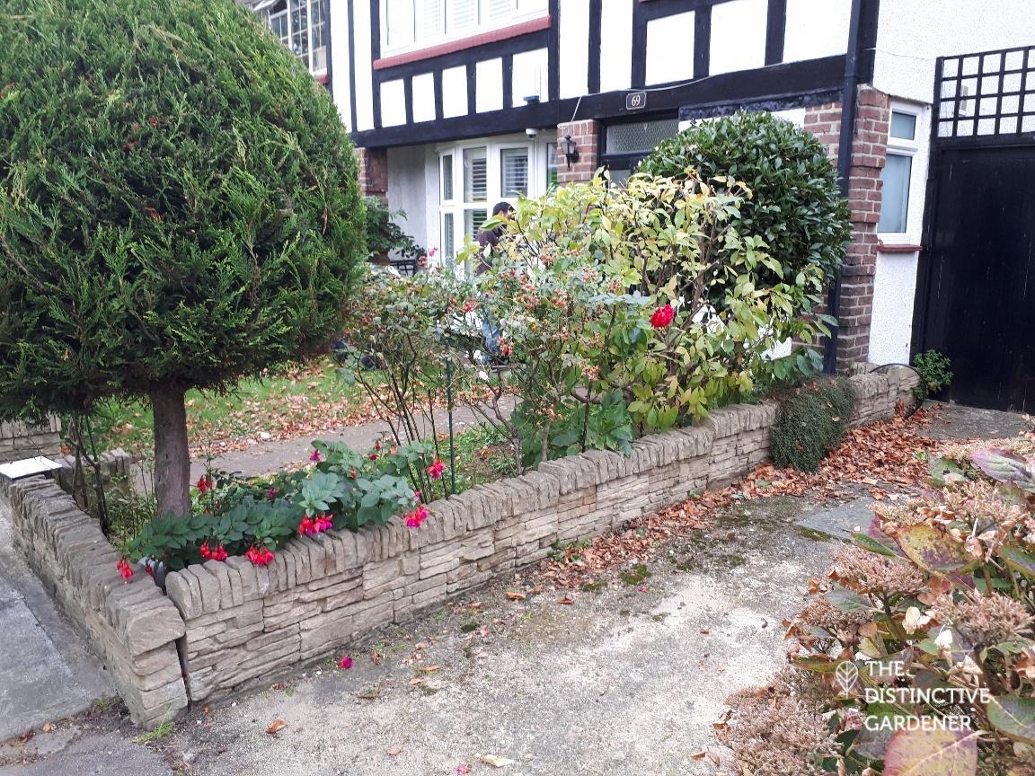 Front garden before transformation