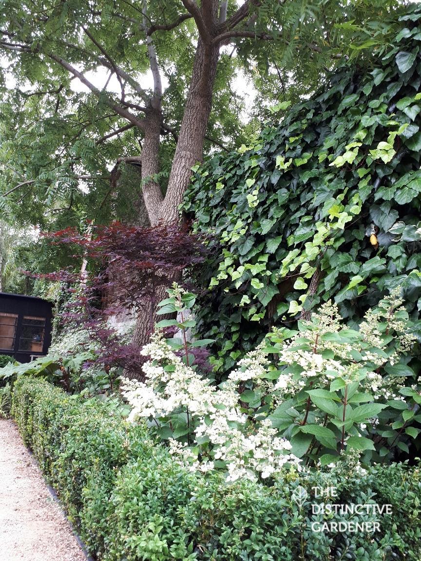 walnut tree bed