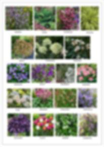 Planting List for Website background .jp