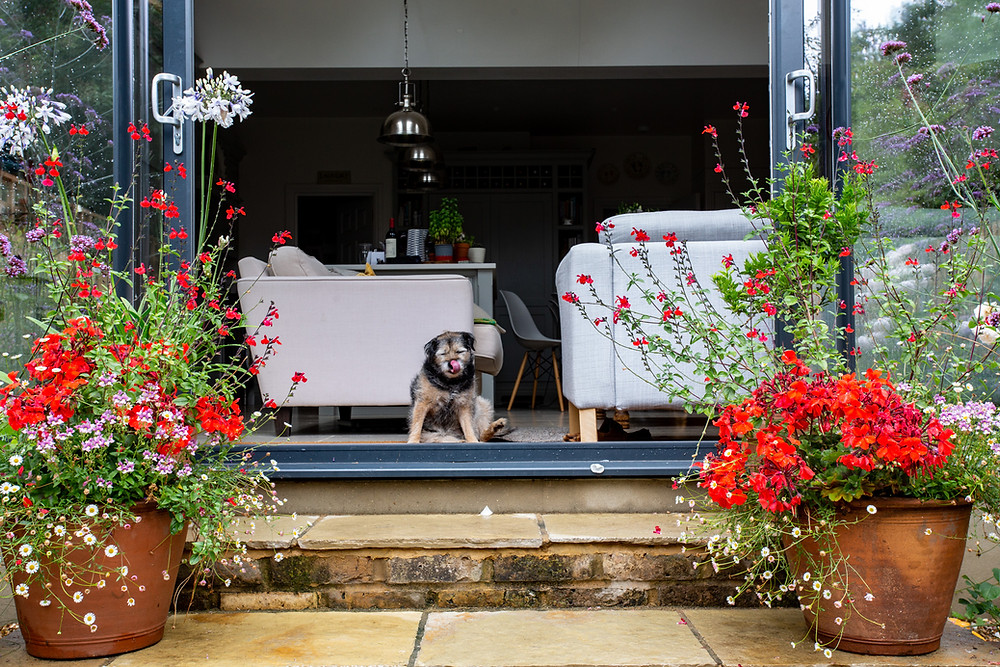 The family dog  surveys the garden from the limestone steps