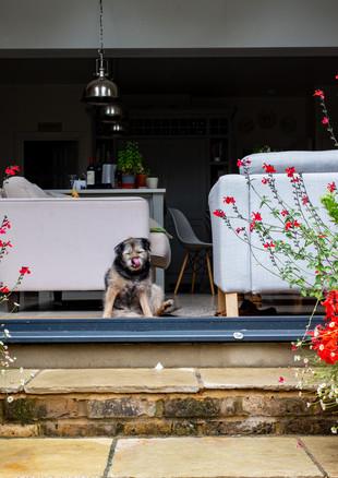 family-garden-dog-jpg