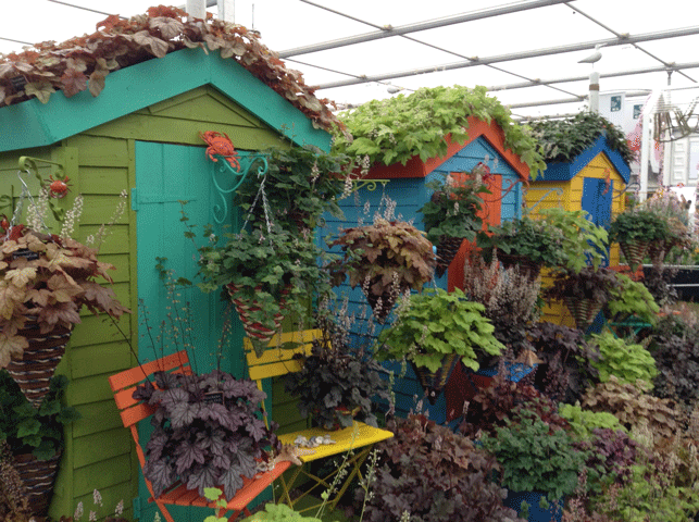 Chelsea Flower Show 2016: Heucheraholics display