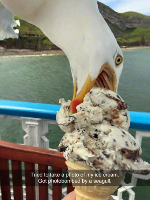 Epic Seagull Fail