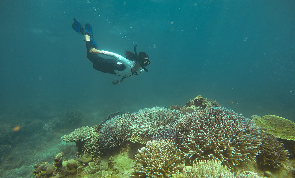 A woman diving towards the corals underwater
