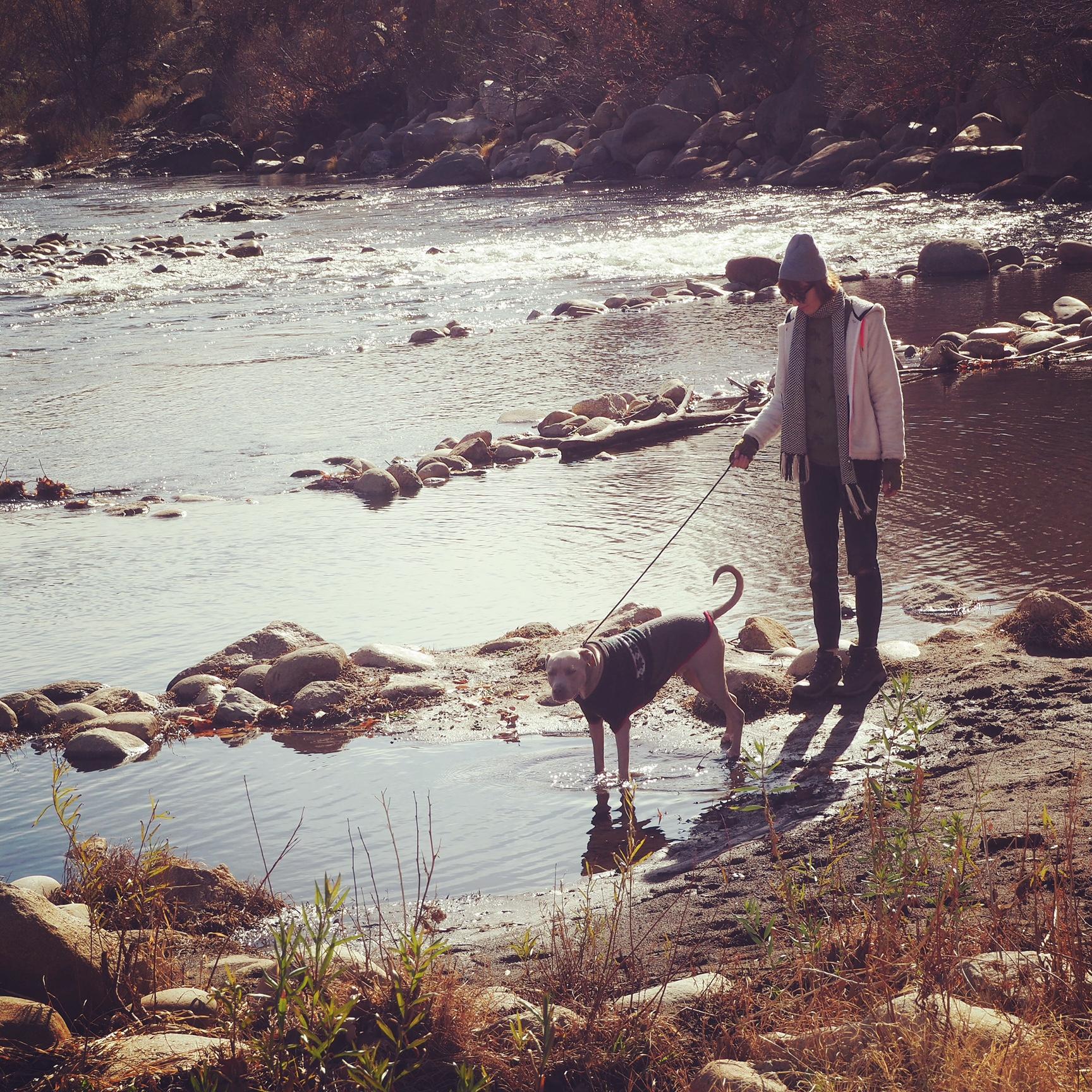 pitbull at the river