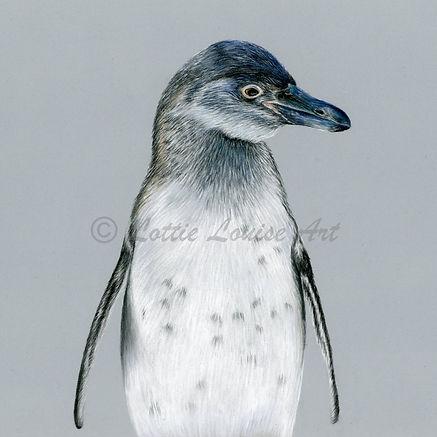 Penguin 8x8.jpg