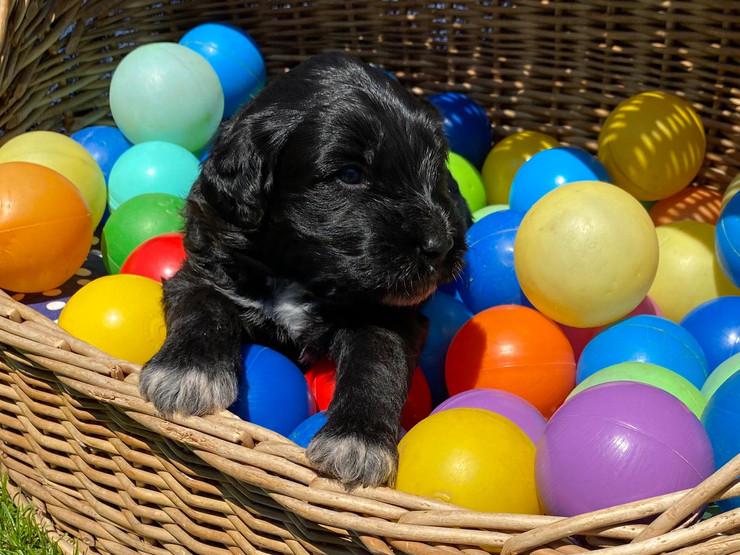Bounty, ca. 3 Wochen alt