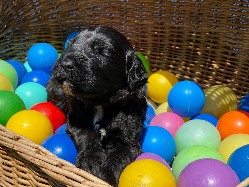 Bailey, ca. 3 Wochen alt