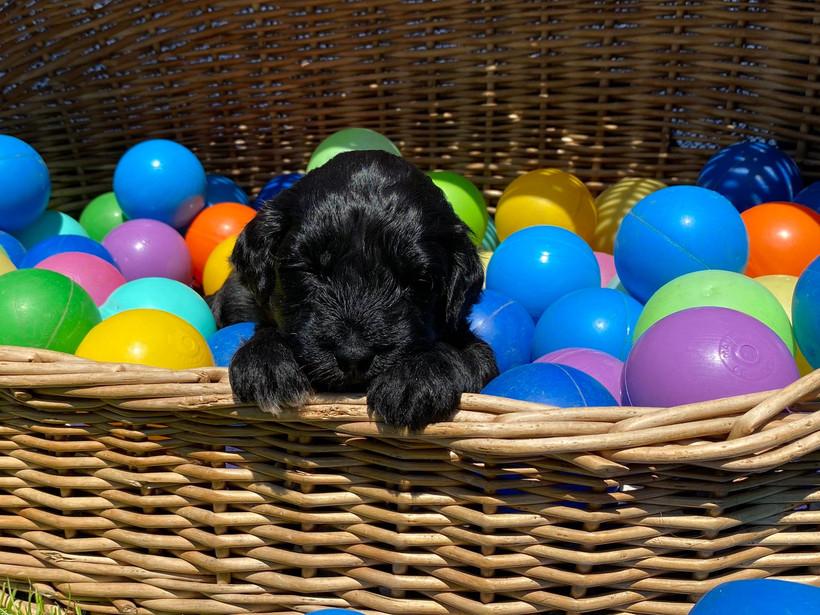 Violett, ca. 3 Wochen alt