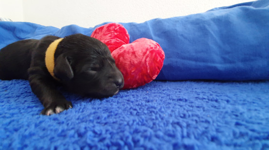 Benji, ca. 2 Tage alt