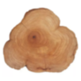 Plant Picture_Cedarwood.png