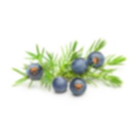 Juniper Berry 1000x1000.png