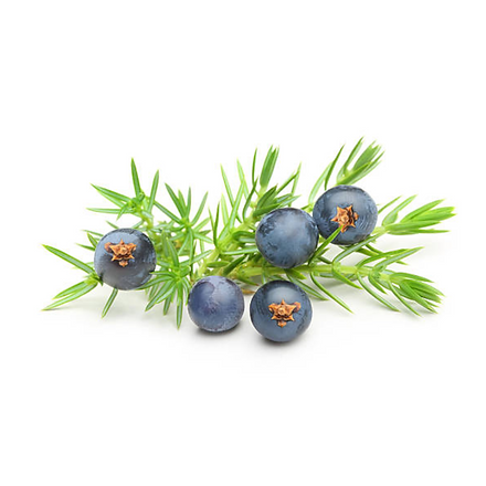 Juniper Berry 1000x1000.png