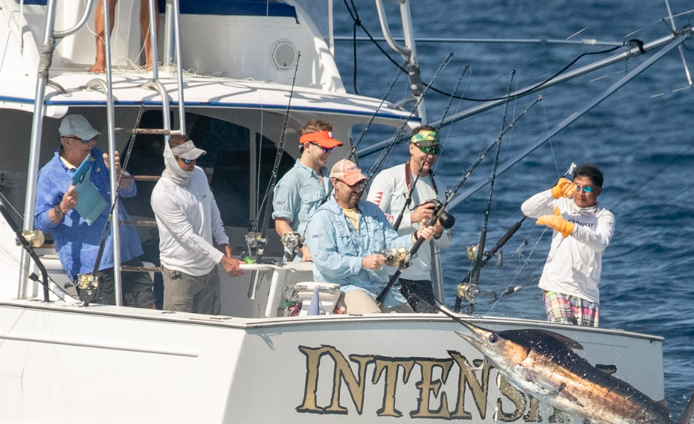 Blue Marlin Guatemala Intensity