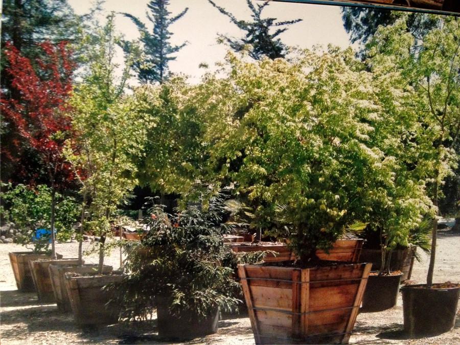 Large Plants at Hillside Landscaping & Design