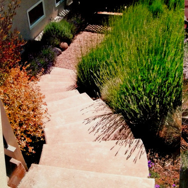 Landscaping Along Steps