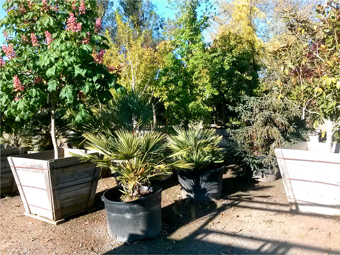 Low-Water Low-Maintenance Plants at our Nursery