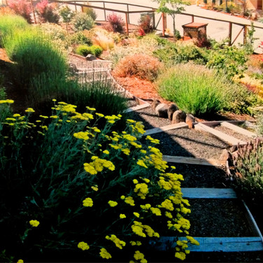 Garden Pathway with Achellia Flowers and Lavender