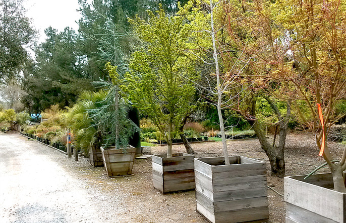 Potted Trees at the Hillside Landscaping & Design Nursery