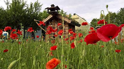Insektenhotel-Mohnfeld.jpg