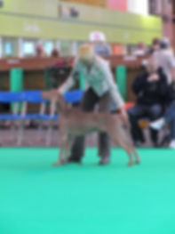 Olwyn showing at Crufts