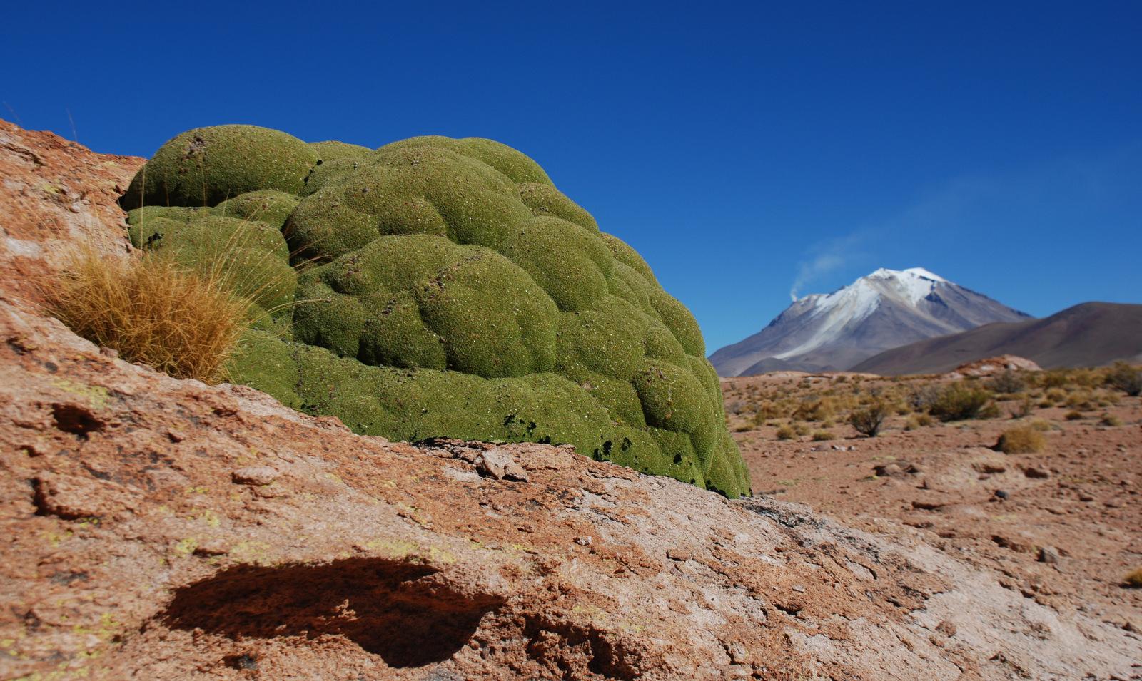 Llareat plant & Ollagüe Volcano