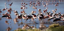 Flamingos and more Flamingos