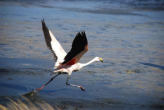 ornithological tours in Bolivia