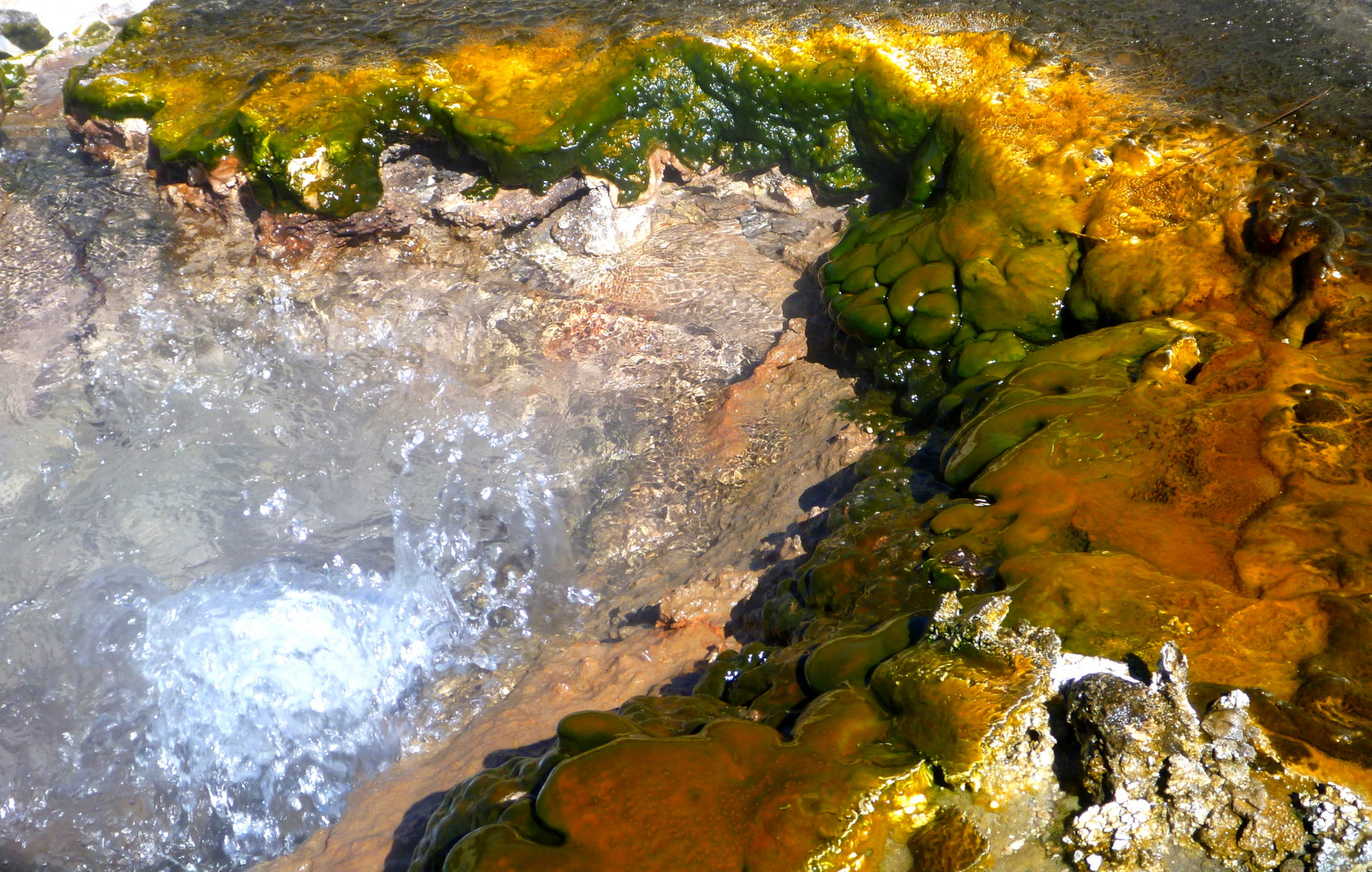 boiling Pools and its microorganism