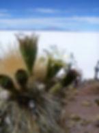 Tour d'un jour Salar de uyuni en Bolivie
