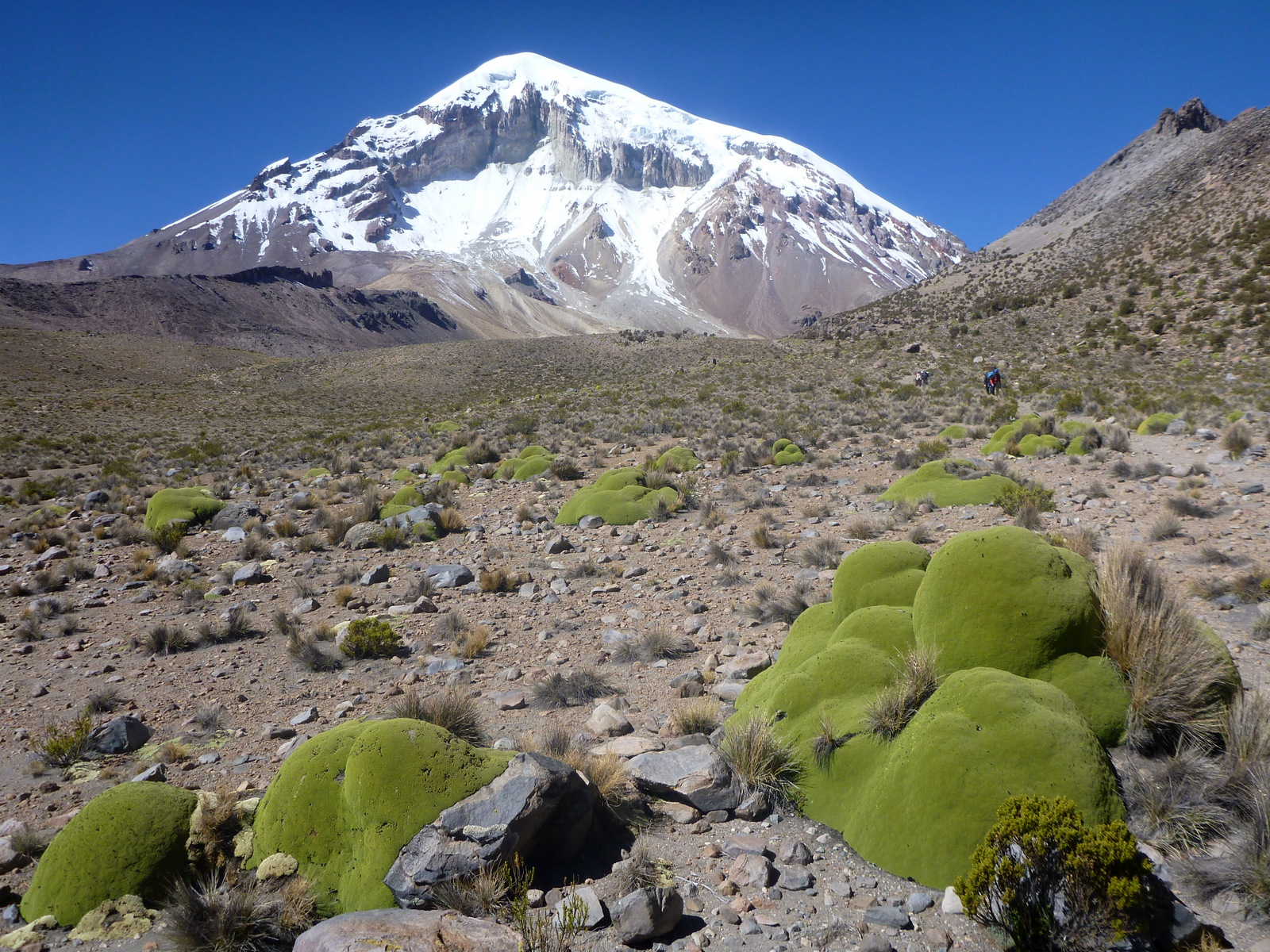 Sajama and millenar Llareta plants