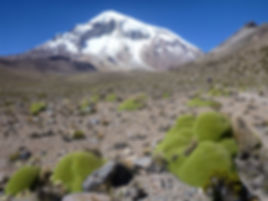 Sajama volcano is the highest summit in Bolivi