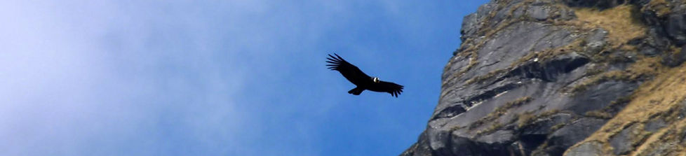While climbing Pequeño Alpamayo in Bolivia one can see the Condor