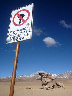 Prohibido escalar el arbol de piedra