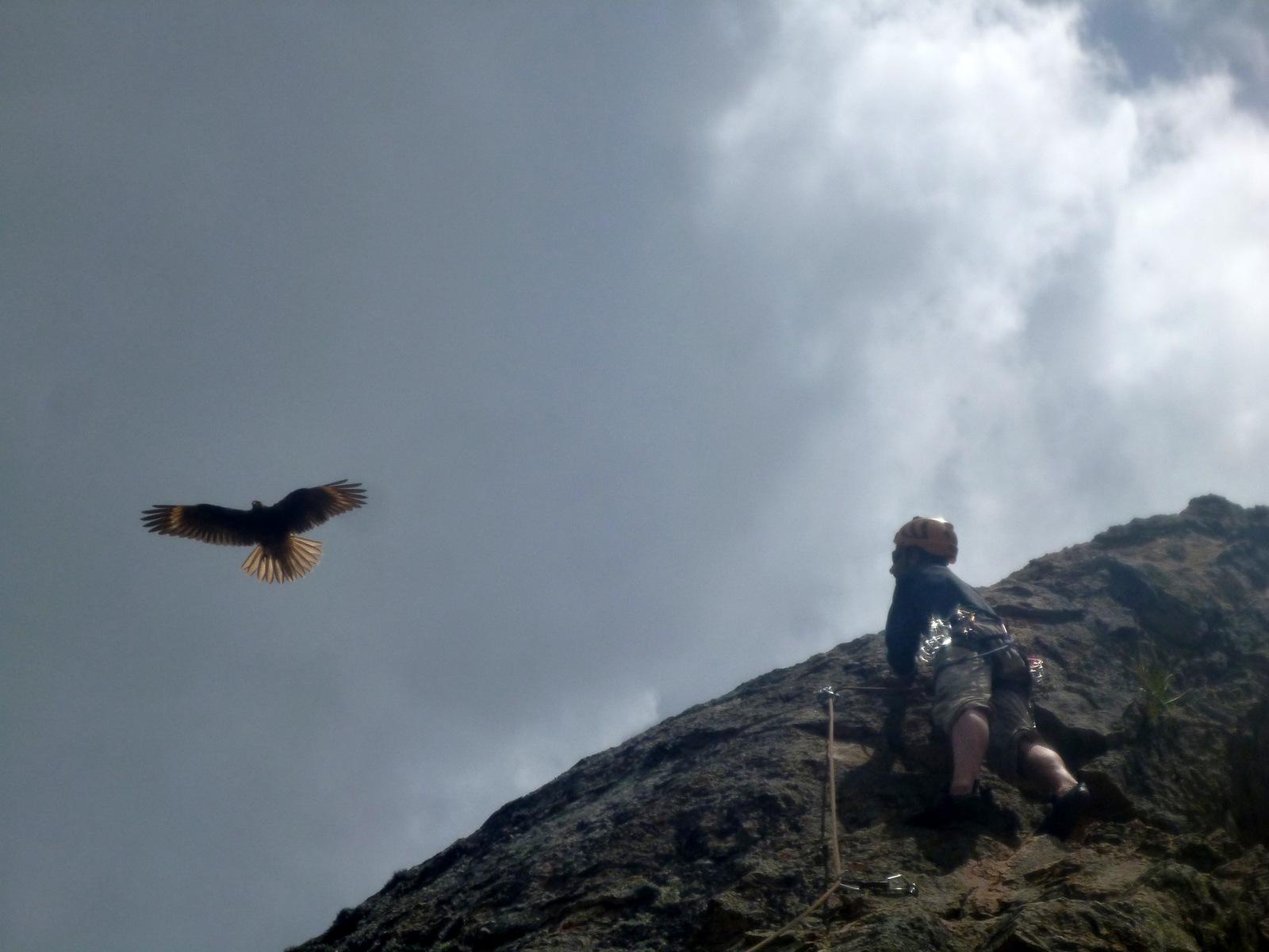 l'oiseau Marie durant l'escalade