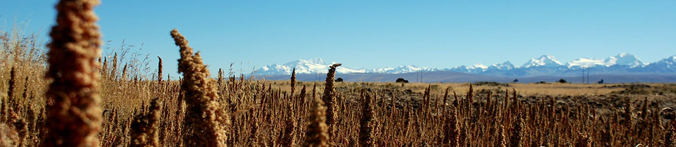 Quinoa cordillera real Bolivia