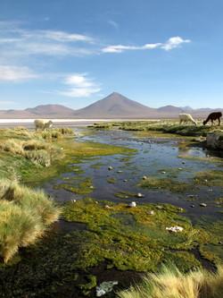 Volcan Pabellon, laguna Colorada