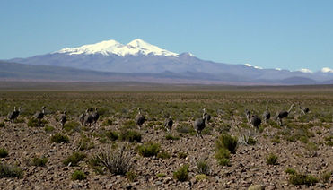 Uturuncu is the only volcano reaching 6000m in the south lipez region