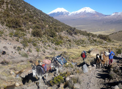 Mules carrying towards base camp