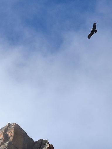 Quimsa Cruz - Condor