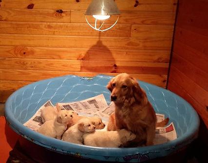 Puppies1 (1).jpg