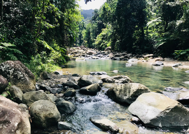 Rio Mameyes 1.JPG